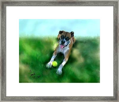 Gus The Rescue Dog Framed Print by Colleen Taylor