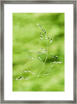 Gust Of Wind - Featured 3 Framed Print