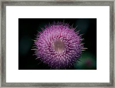 Gynormous Thistle Framed Print