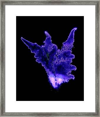 Gynura Plant Framed Print