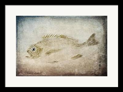 Fish Rubbing Framed Prints