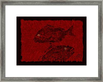 Gyotaku Scup Series 4 Red Unryu Paper Framed Print by Jeffrey Canha