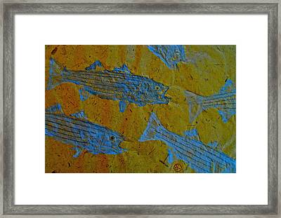 Gyotaku - Striped Bass - Rockfish - Linesider Framed Print