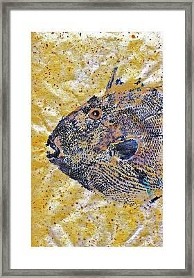 Gyotaku - Triggerfish - Oldwench -  Diptych 1  Framed Print