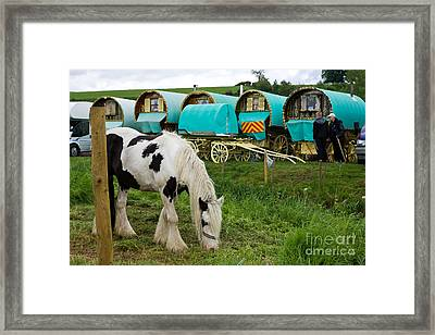 Gypsy Cob And Wagons Framed Print by Liz  Alderdice