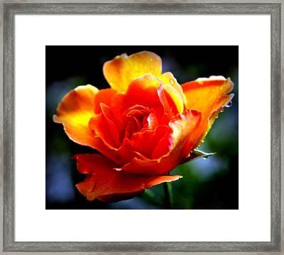 Gypsy Rose Framed Print by Karen Wiles