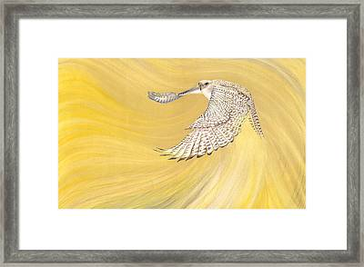 Gyrfalcon Gliding Into The Light Framed Print