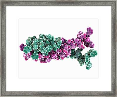 H-ns Chromatin-structuring Protein Framed Print by Science Photo Library