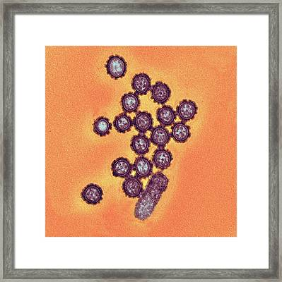 H1n1 Flu Virus Particles Framed Print