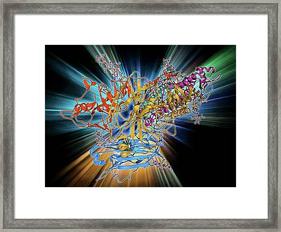 H5n1 Haemagglutinin Protein Subunit Framed Print by Laguna Design