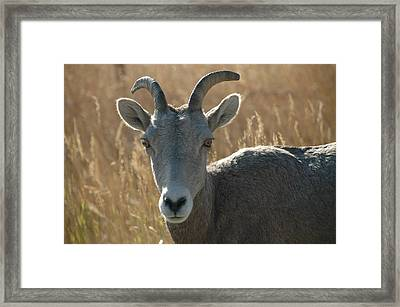 Ha Brown Eyes Framed Print