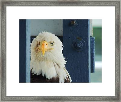 Had A Hard Life Framed Print by Karen Horn
