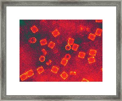 Haemocyanin Protein Complexes Framed Print by Ammrf, University Of Sydney