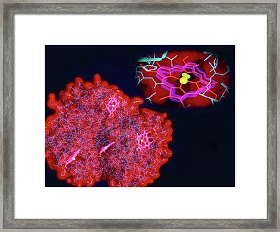 Haemoglobin And Haem Framed Print by Juan Gaertner