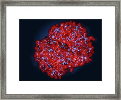 Haemoglobin Framed Print