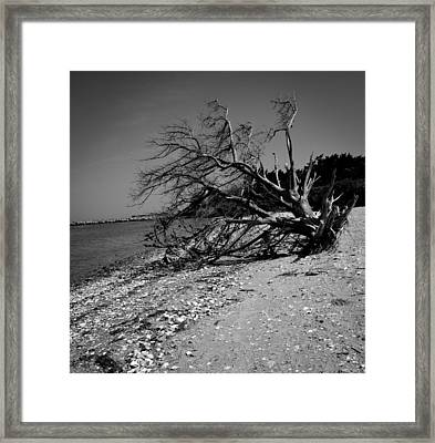 Haggard Tree Framed Print