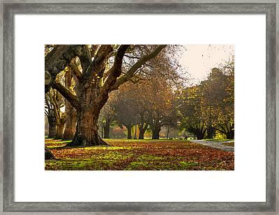 Hagley In Autumn Framed Print
