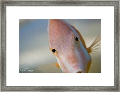 Hai There Framed Print by Guinapora Graphics