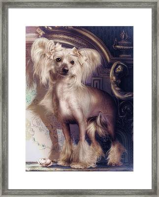 Hair Less Chinese Framed Print by Cindy Grundsten