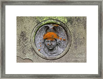 Hair Transplant Framed Print by James Brunker