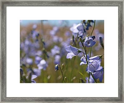 Framed Print featuring the photograph Harebells by Jenessa Rahn