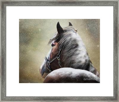 Hairs For The Nest Framed Print by Trudi Simmonds