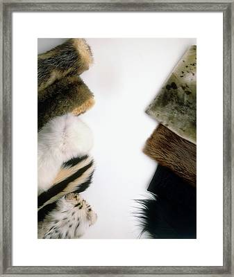 Hairseal Fur Framed Print