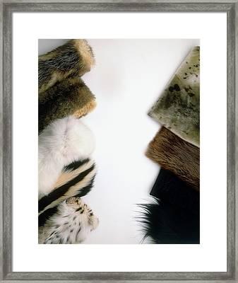 Hairseal Fur Framed Print by Dorling Kindersley/uig