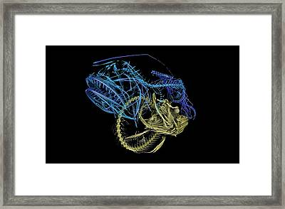 Hairy Anglerfish Framed Print by Dan Sykes/natural History Museum, London