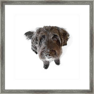 Hairy Dog Photographic Caricature Framed Print