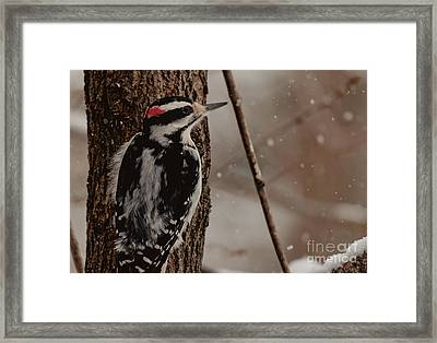 Hairy In The Snow Framed Print