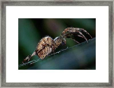 Hairy Lady Framed Print