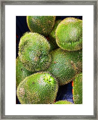 Hairy Peary Chayote Squash By Diana Sainz Framed Print