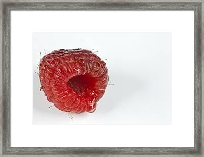 Hairy Raspberry Framed Print