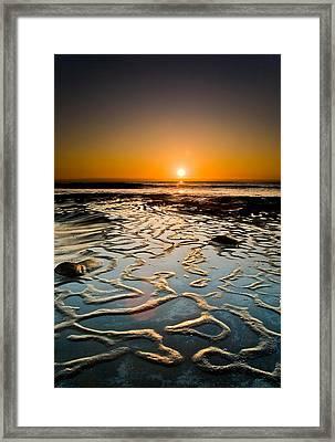 Halcyon Framed Print