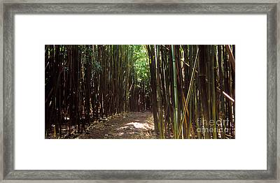 Haleakala  Hnp 0142-2 Framed Print by Frank Wicker