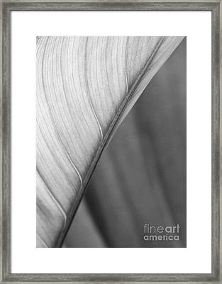 Half And Half Framed Print by Sabrina L Ryan