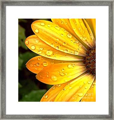 Half Framed Print by Christy Ricafrente
