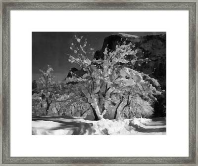 Half Dome Apple Orchard Framed Print by Ansel Adams
