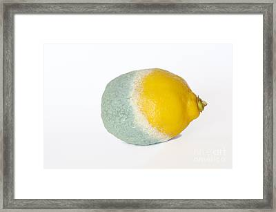 Half Rotten Lemon Framed Print by Sami Sarkis