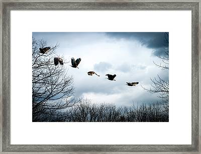 Half Second Of Flight Framed Print by Bob Orsillo