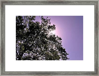 Half Tree Framed Print by Matt Harang