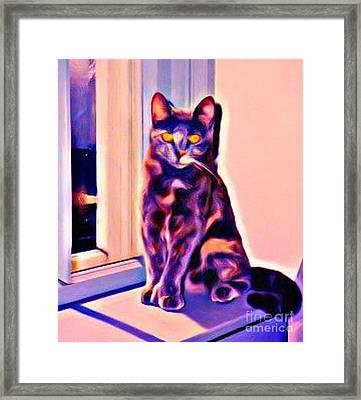 Halifax Cat Framed Print