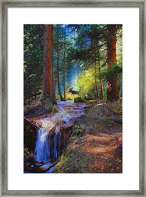 Hall Valley Moose Framed Print