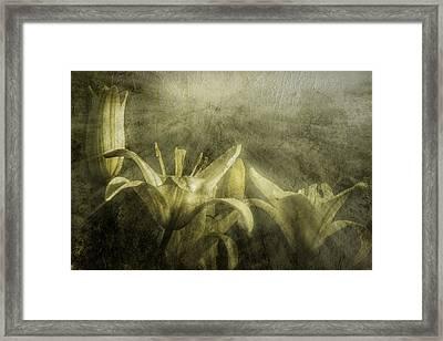 Halleluiah Framed Print by Diane Schuster