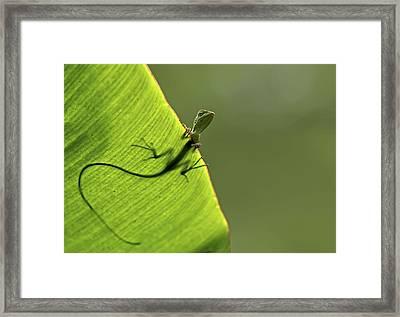 Hallo Framed Print