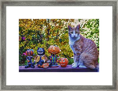 Halloween Cat Framed Print by Garry Gay