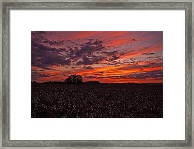 Halloween Dawn  Framed Print