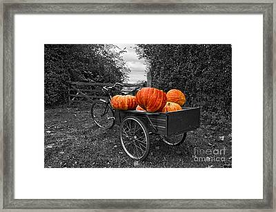 Halloween Harvest Framed Print by Nick Wardekker