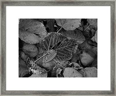 Halloween Leaves Framed Print by Tim Good